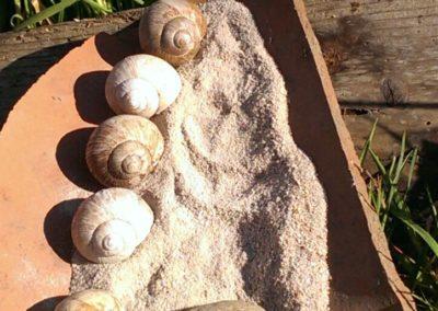Homöopathie für den Hausgarten selbst gemacht